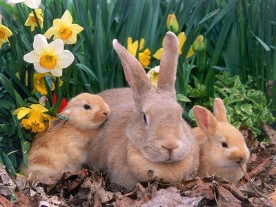 Трава для кроликов: какую можно давать, а какую нельзя?