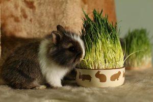 Кормление кроликов в домашних условиях для начинающих 410