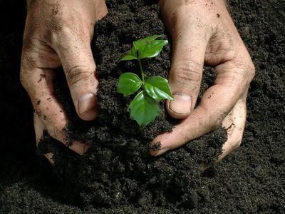 Классификация и применение минеральных удобрений