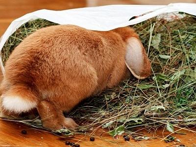 Кормление декоративных кроликов: сено и концкорма