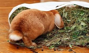 Чем кормить декоративных домашних кроликов?