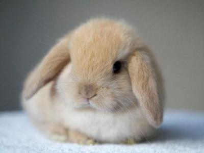 Клетки для карликовых кроликов
