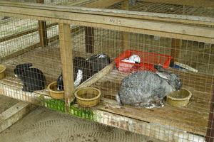 как растить кроликов в домашних условиях