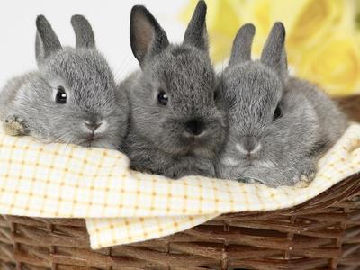 Все о кроликах от рождения до забоя характеристика информация