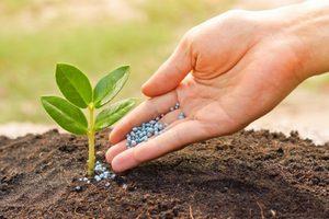 Описание значения фосфорных удобрений для растений