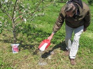 Правила и способы внесения фосфорных удобрений в почву
