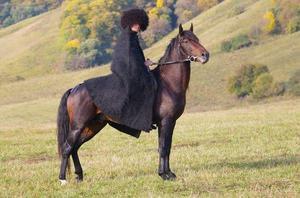 Характер лошади