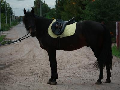 Карачаевская лошадь генетика разведение