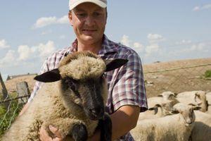 Советы опытных овцеводов для начинающих
