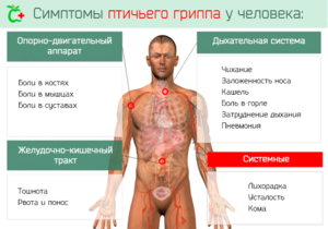 Какие симптомы проявляются при заражении