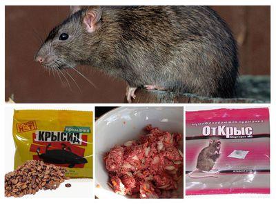 Как избавиться от крыс в сарае народными средствами