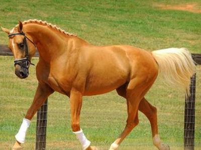 Какая максимальная и минимальная скорость у лошади