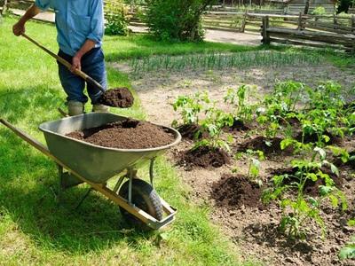 Торф как удобрение: назначение и особенности применения