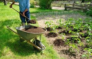 використання торфу на городі