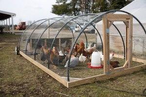 Выращиание домашних кур