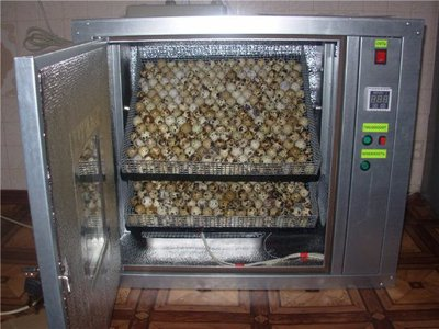 Инкубатор для перепелиных яиц: преимущества конструкции для перепелов, как сделать его своими руками