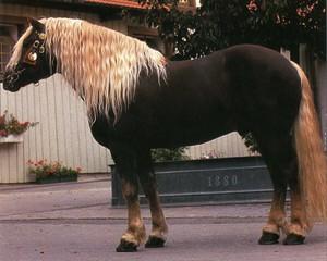 какие бывают породы коней