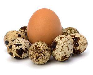 Польза и вред перепелиных яиц  фото
