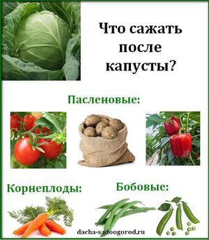 Что посадить после капусты