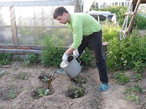 Как выращивать куоьтуры по последовательностью