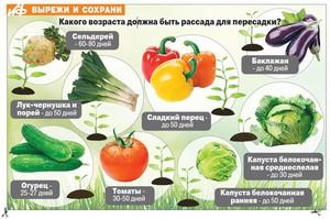 Порядок на грядках: какие растения несовместимы друг с другом 15