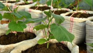 Выращивание огурцов в мешках  фото