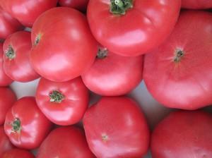 Заболевания томатов сорта Розовый гигант