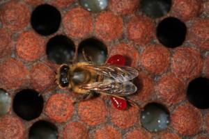Какими болезнями могут болеть пчелы