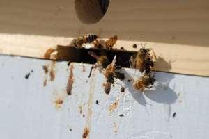 Чем болеют пчелы