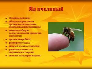 Своййства пчелиного яда