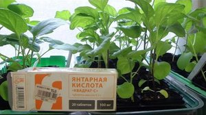 Как использовать удобрения для растений